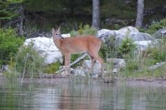 Wildlife on Lake Huron